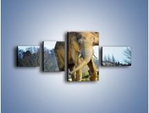Obraz na płótnie – Ciężkie życie słonia – czteroczęściowy Z273W5