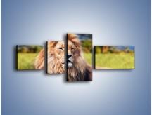 Obraz na płótnie – Dostojny lew na sawannie – czteroczęściowy Z282W5