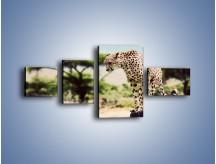 Obraz na płótnie – Cała zwinność geparda – czteroczęściowy Z315W5