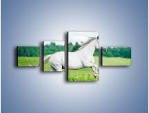 Obraz na płótnie – Biały koń i leśna polana – czteroczęściowy Z317W5