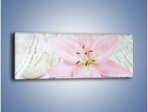 Obraz na płótnie – Cała słodycz w lilii – jednoczęściowy panoramiczny K727