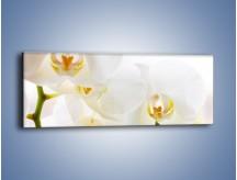 Obraz na płótnie – Białe storczyki blisko siebie – jednoczęściowy panoramiczny K811