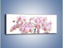 Obraz na płótnie – Cieniutkie gałązki storczyków – jednoczęściowy panoramiczny K813