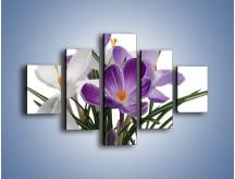 Obraz na płótnie – Biało-fioletowe krokusy – pięcioczęściowy K020W1