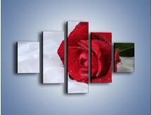 Obraz na płótnie – Bordowa róża na białej pościeli – pięcioczęściowy K1023W1