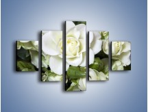 Obraz na płótnie – Białe róże na stole – pięcioczęściowy K131W1
