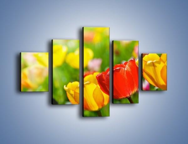 Obraz na płótnie – Wiosenne piękno w tulipanach – pięcioczęściowy K213W1