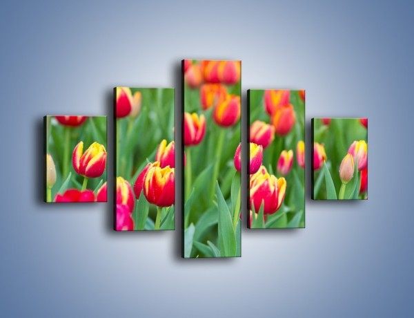 Obraz na płótnie – Spacer wśród czerwonych tulipanów – pięcioczęściowy K231W1