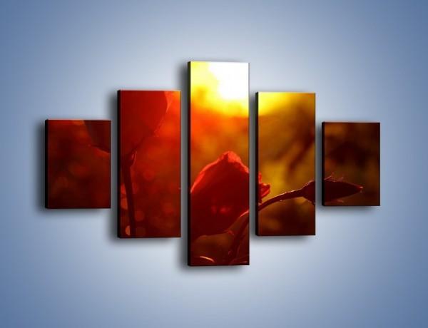 Obraz na płótnie – Słońce czy róża – pięcioczęściowy K264W1