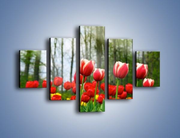 Obraz na płótnie – Leśna polana pełna tulipanów – pięcioczęściowy K319W1