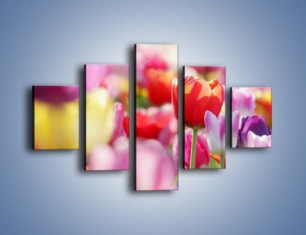 Obraz na płótnie – Boso przez tulipany – pięcioczęściowy K344W1