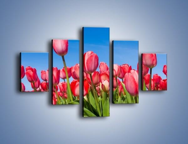 Obraz na płótnie – Tulipany czerwone jak nigdy – pięcioczęściowy K345W1
