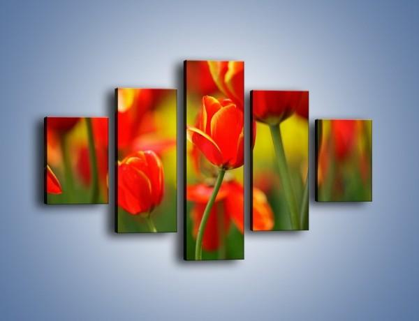 Obraz na płótnie – Wyraźny charakter tulipanów – pięcioczęściowy K349W1