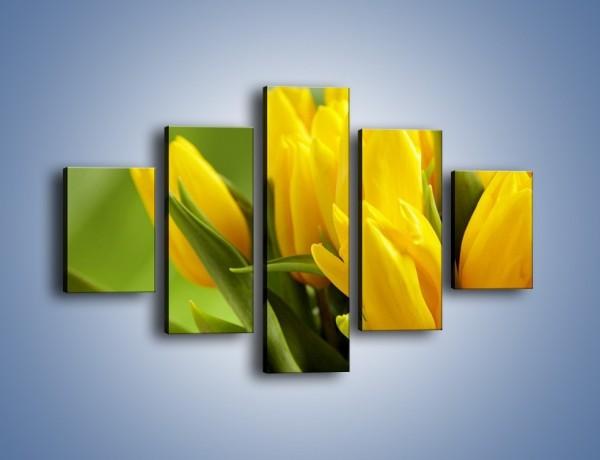 Obraz na płótnie – Słońce schowane w tulipanach – pięcioczęściowy K424W1