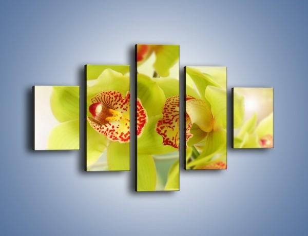 Obraz na płótnie – Limonkowy kwiat – pięcioczęściowy K447W1
