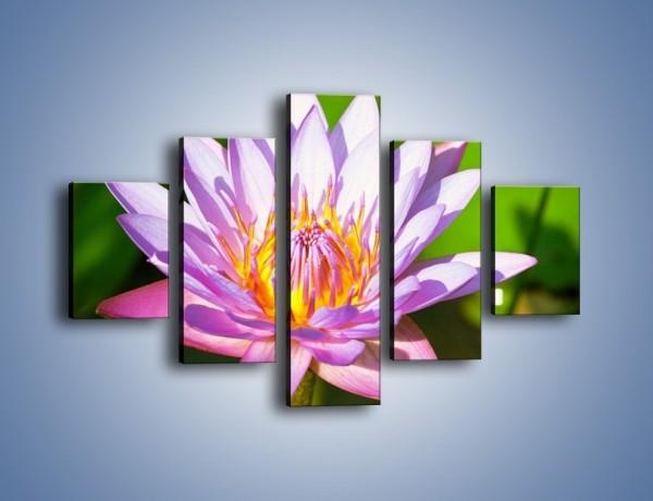 Obraz na płótnie – Wesoły kwiat w słońcu – pięcioczęściowy K455W1