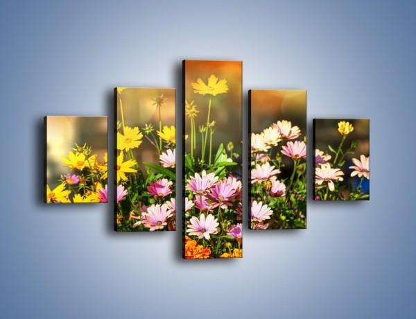 Obraz na płótnie – Polne kwiaty z uśmiechem – pięcioczęściowy K456W1