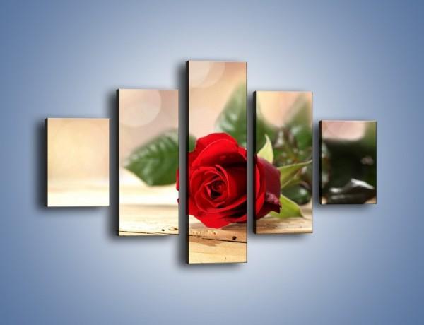 Obraz na płótnie – Stęskniona róża – pięcioczęściowy K505W1