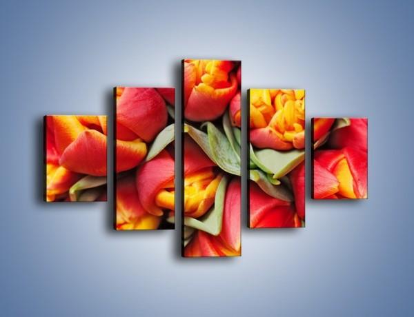 Obraz na płótnie – Tulipany papuzie – pięcioczęściowy K573W1