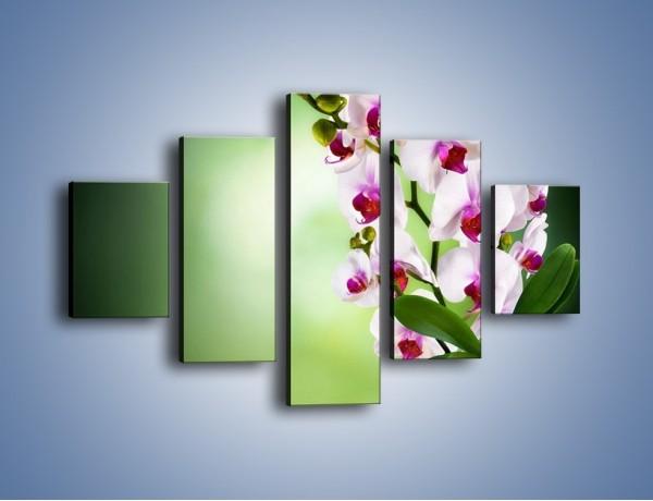 Obraz na płótnie – Kwiaty o zmierzchu – pięcioczęściowy K726W1
