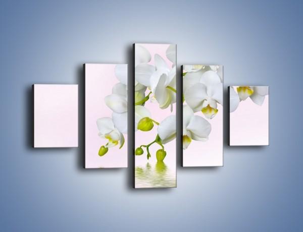 Obraz na płótnie – Spragnione wody białe storczyki – pięcioczęściowy K809W1