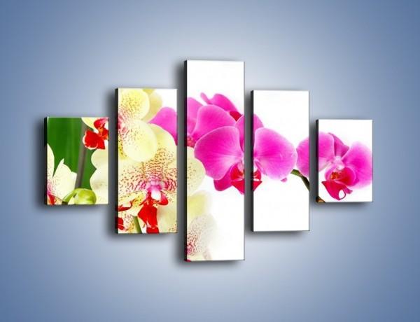Obraz na płótnie – Wszystkie kolory storczyka – pięcioczęściowy K834W1