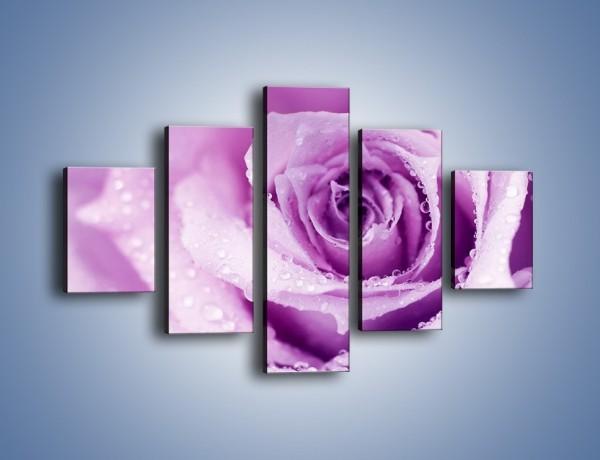 Obraz na płótnie – Jasny fiolet w róży – pięcioczęściowy K894W1