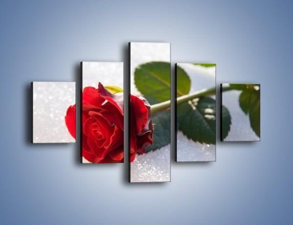 Obraz na płótnie – Gorąca róża na zmrożonej tafli – pięcioczęściowy K946W1