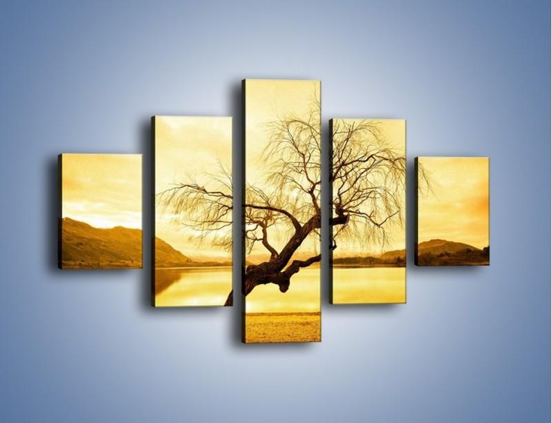 Obraz na płótnie – Pochylone drzewo w sepii – pięcioczęściowy KN1033W1