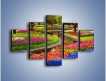 Obraz na płótnie – Aleje kolorowych tulipanów – pięcioczęściowy KN1079W1