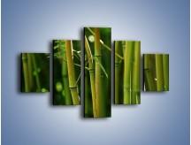 Obraz na płótnie – Bambusowe łodygi z bliska – pięcioczęściowy KN118W1