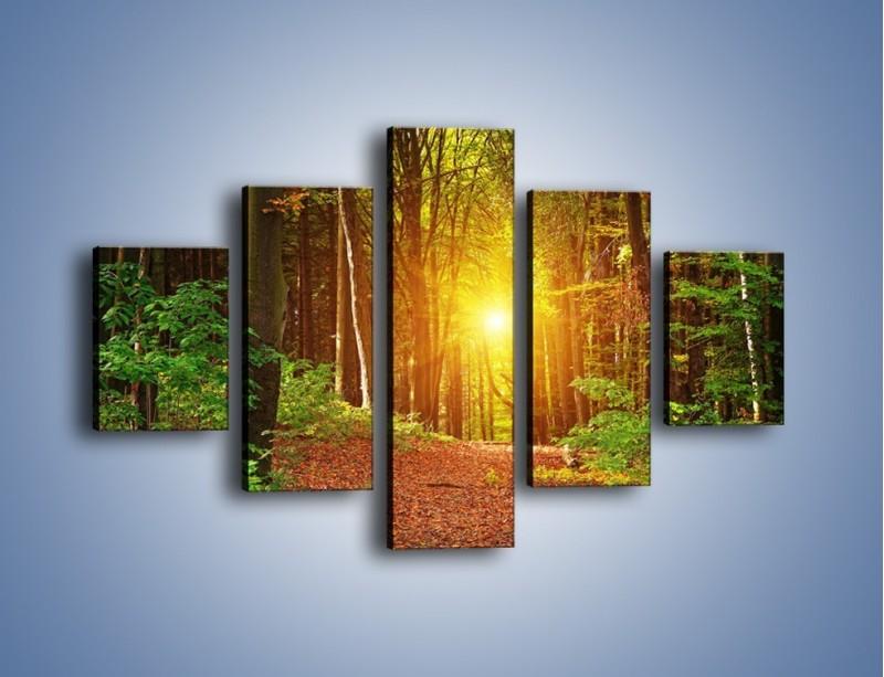 Obraz na płótnie – Polski krajobraz leśny – pięcioczęściowy KN1257AW1