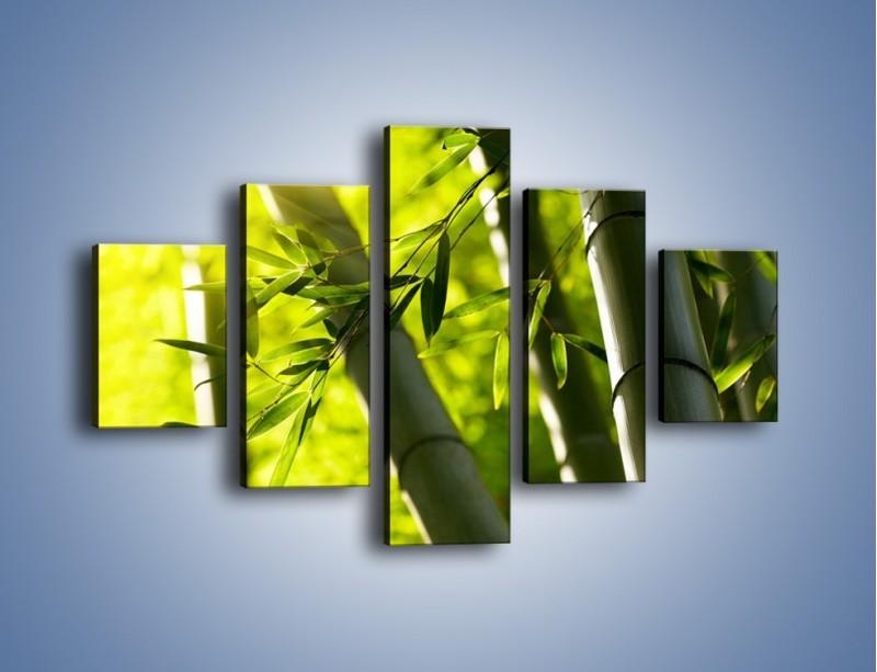 Obraz na płótnie – Twarde łodygi bambusa – pięcioczęściowy KN1314AW1