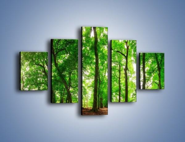 Obraz na płótnie – Zieleń i goła ziemia – pięcioczęściowy KN1339AW1