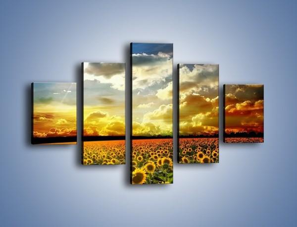Obraz na płótnie – Pole rozwiniętych słoneczników – pięcioczęściowy KN204W1