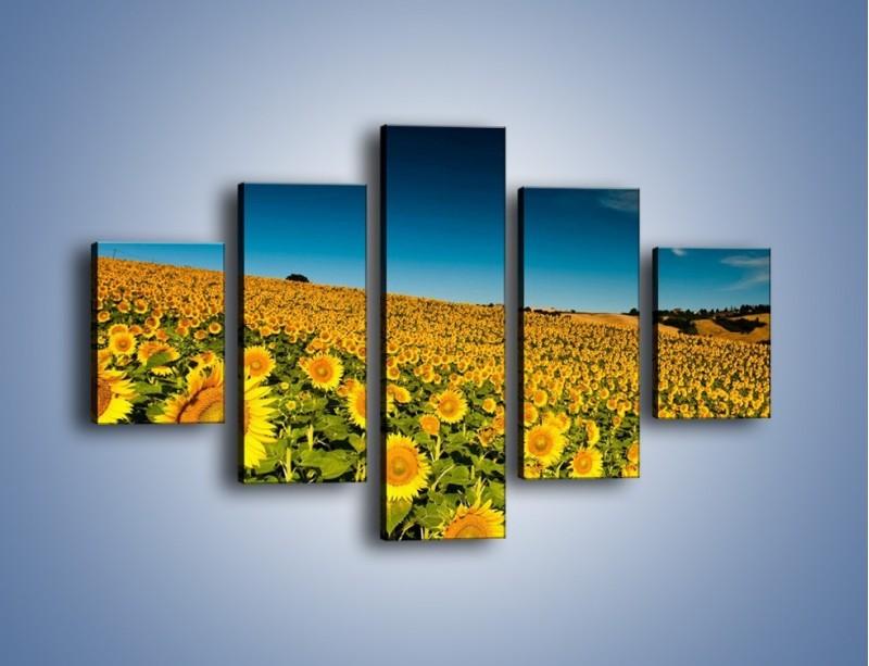 Obraz na płótnie – Słonecznikowe uśmiechnięte główki – pięcioczęściowy KN205W1