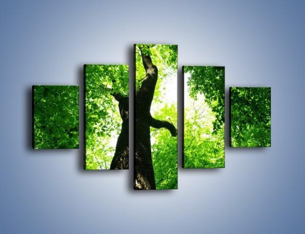 Obraz na płótnie – Drzewo bardzo wysokie – pięcioczęściowy KN344W1