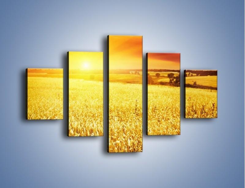Obraz na płótnie – Zboże złote jak słońce – pięcioczęściowy KN398W1