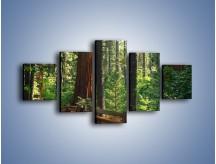 Obraz na płótnie – Chodźmy do lasu – pięcioczęściowy KN611W1