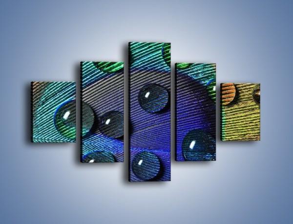 Obraz na płótnie – Kropelki na pawim oku – pięcioczęściowy O047W1