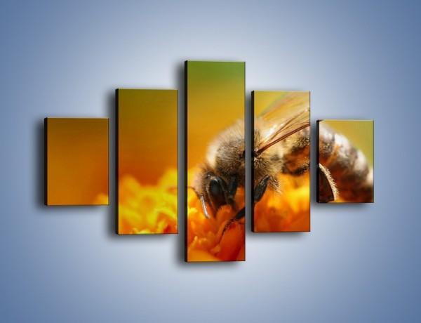 Obraz na płótnie – Pszczoła zbierająca nektar – pięcioczęściowy Z002W1