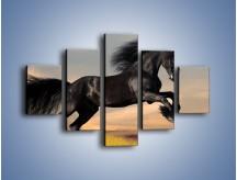 Obraz na płótnie – Czarny koń w galopie – pięcioczęściowy Z008W1