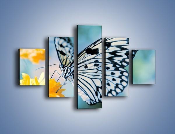 Obraz na płótnie – Motyw zebry w motylu – pięcioczęściowy Z010W1