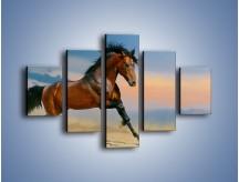 Obraz na płótnie – Brązowy koń na pustyni – pięcioczęściowy Z011W1