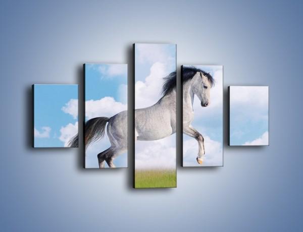 Obraz na płótnie – Białe obłoki i koń – pięcioczęściowy Z019W1