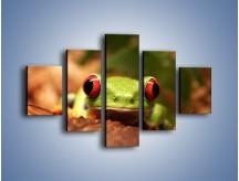 Obraz na płótnie – Bystre oczka małej żabki – pięcioczęściowy Z023W1