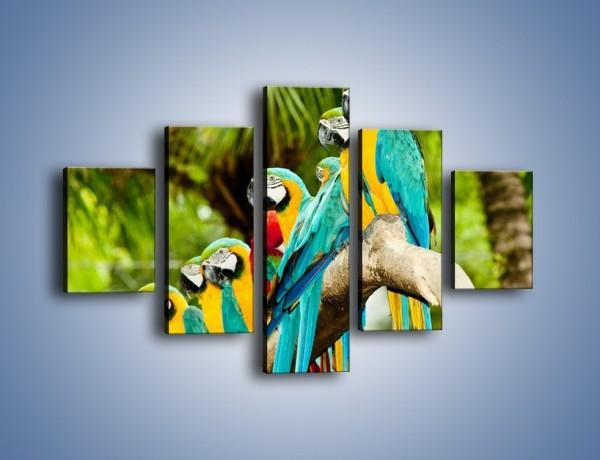 Obraz na płótnie – Kolorowe papugi w szeregu – pięcioczęściowy Z029W1