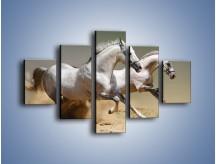Obraz na płótnie – Białe konie w pustynnym galopie – pięcioczęściowy Z055W1