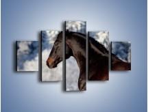 Obraz na płótnie – Brązowy ogier na zimowym spacerze – pięcioczęściowy Z056W1