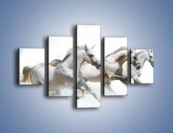 Obraz na płótnie – Końskie trio w zimowym pędzie – pięcioczęściowy Z063W1